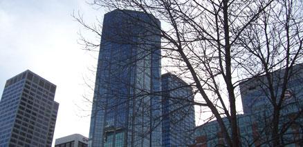 Calgary Skyline with Tree