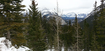 Banff Mountains View